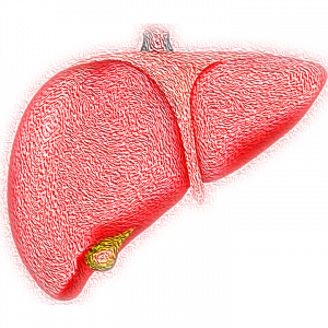Image of a human liver