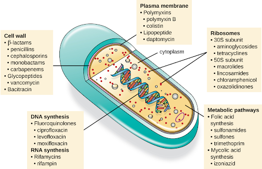 Illustration of various mechanisms of actions of antimicrobial medication with labels