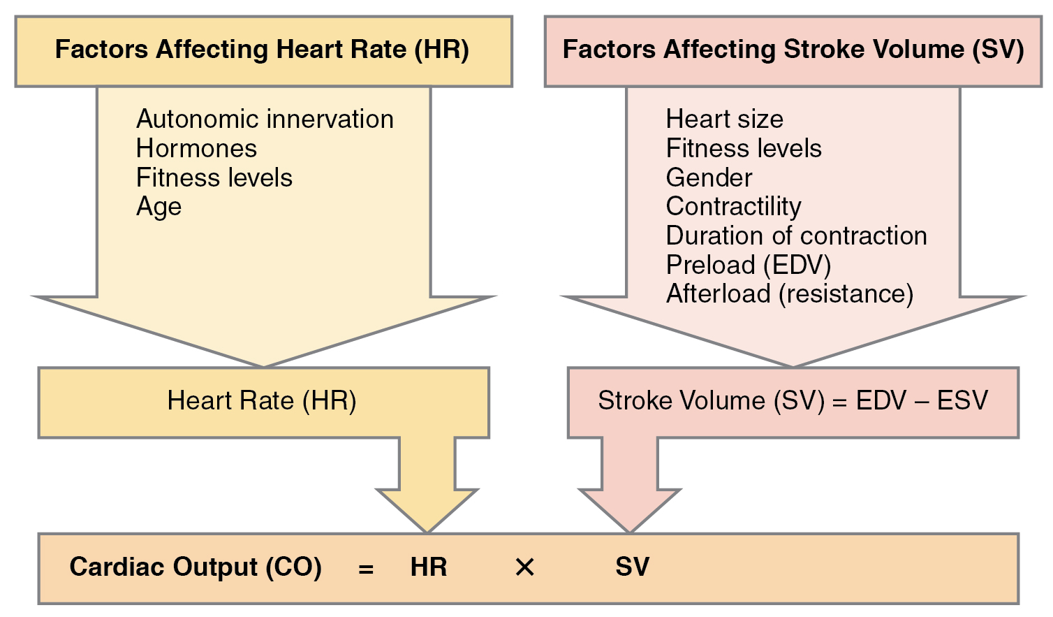 Process chart showing factors that affect cardiac output.