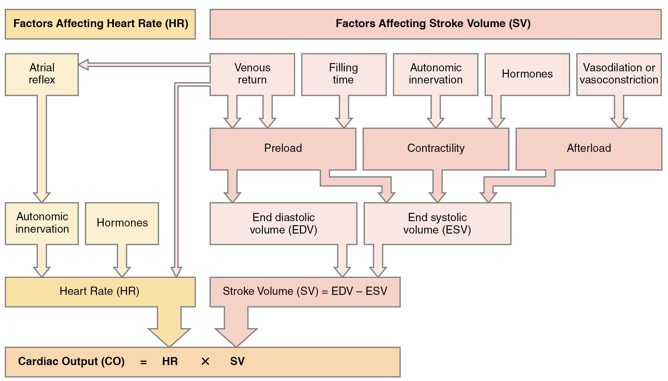 Illustration of process chart showing major factors that influence cardiac output.
